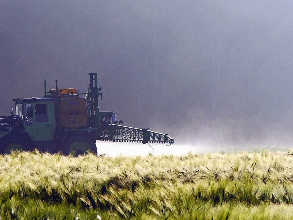 fertilizzazione campi di grano