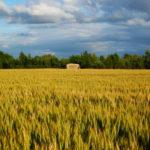 Uso di fitofarmaci in agricoltura PAN sicurezza